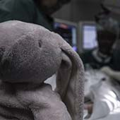 stuffed elephant in hospital