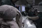 stuffed elephant in hospital