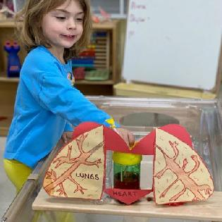 Child uses interactive heart model to learn how blood flows through the body.