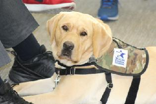 Service Dogs in Training Provide Therapy for Wounded Warriors